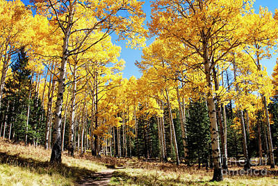 Photograph - Among The Aspens by Scott Kemper