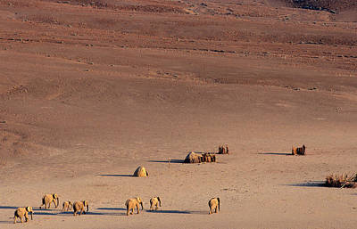 Animal Family Photograph - An Aerial Of A Small African Desert by Hphimagelibrary