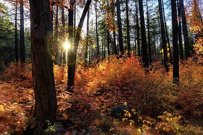 Photograph - An Arizona Autumn Morning  by Saija Lehtonen