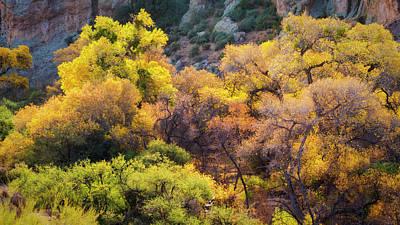 Photograph - An Autumn Palatte In The Sonoran  by Saija Lehtonen