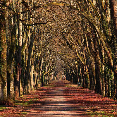 An Avenue Of Trees At The Chateau Of Art Print