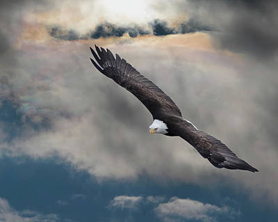 Bird Photograph - An Eagle In Flight Rising Above The by Design Pics / Robert Bartow