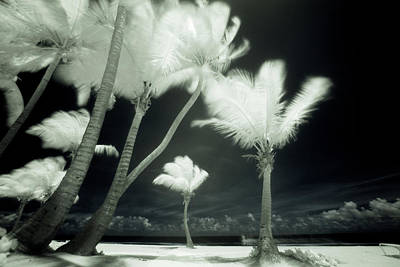 Tree Photograph - An Infrared Image Of Tall Palm Trees by Mint Images/ Art Wolfe
