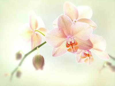 Photograph - An Orchid Spray. by Usha Peddamatham