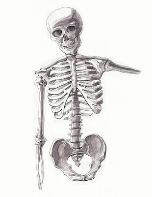 Painting - Anatomical Study Of Skeleton by Irina Sztukowski
