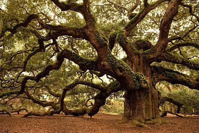 Photograph - Ancient Angel Oak Near Charleston by Pgiam