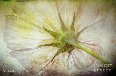 Photograph - Ancient Flower by Dominique Guillaume