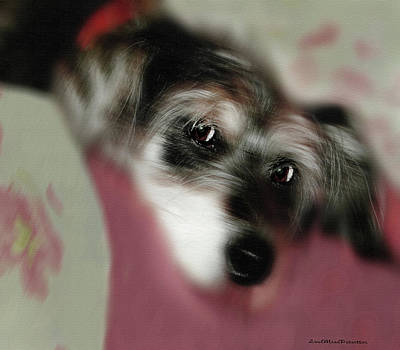 Digital Art - And This Is Sparky 8 by Miss Pet Sitter