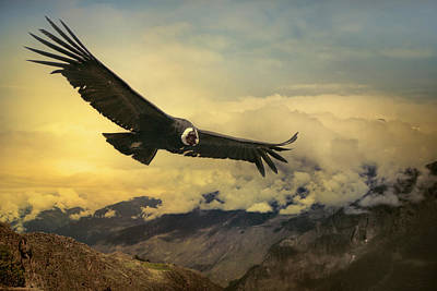 Flying Photograph - Andean Condor by Istvan Kadar Photography