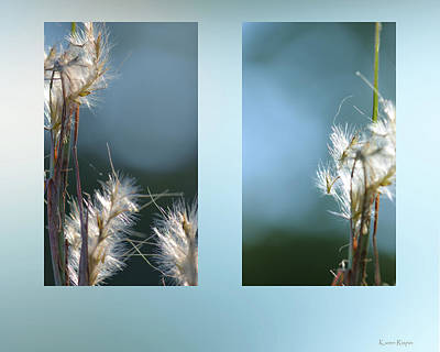 Photograph - Andropogon Bluestem by Karen Rispin
