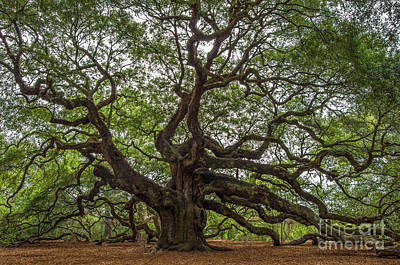 Photograph - Angel Oak Tree Mysteries by Dale Powell