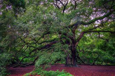 Photograph - Angel Oak Tree by Rick Berk