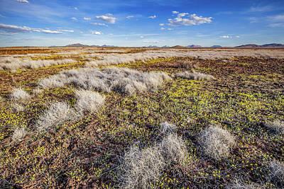Photograph - Animas High Desert In Bloom by Lon Dittrick