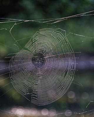 Photograph - Another Web by Paul Ross