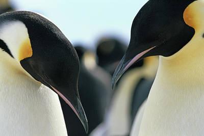 Photograph - Antarctica, Dumont Durville Base by Philippe Bourseiller