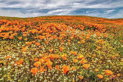 Photograph - Antelope Valley Spring by Peter Tellone