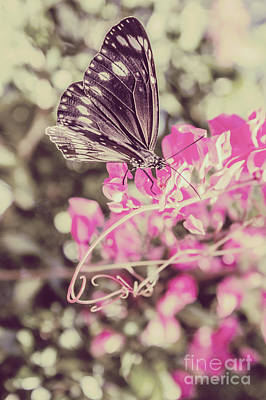 Photograph - Antique Spring by Jorgo Photography - Wall Art Gallery