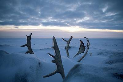 Photograph - Antlers With A View, Alaska, 2019 by AR Duchene