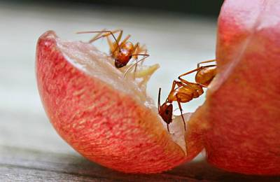 Photograph - Ants by Candice Trimble