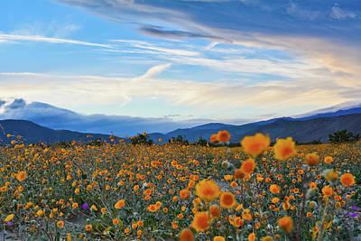 Photograph - Anza Borrego Desert Sunflower Sunset by Kyle Hanson