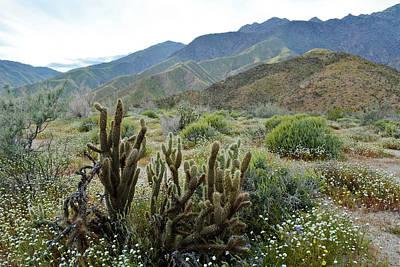 Photograph - Anza Borrego Desertscape by Kyle Hanson