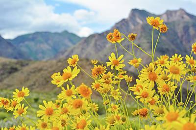 Photograph - Anza Borrego Wildflowers by Kyle Hanson