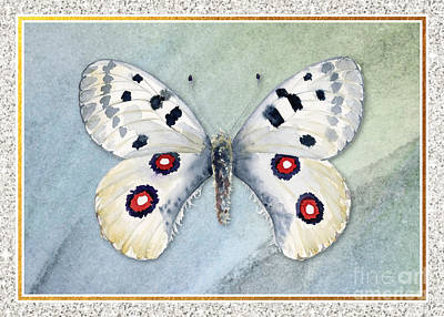 Royalty-Free and Rights-Managed Images - Apollo Butterfly by Amy Kirkpatrick