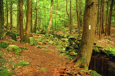 Photograph - Appalachian Trail In Massachusetts October Forest by Raymond Salani III