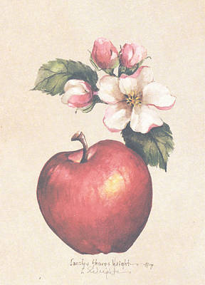 Wall Art - Painting - Apple And Blossoms by Carolyn Shores Wright