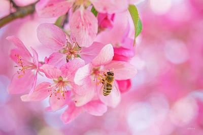Photograph - Apple Blossom 2 by Leland D Howard