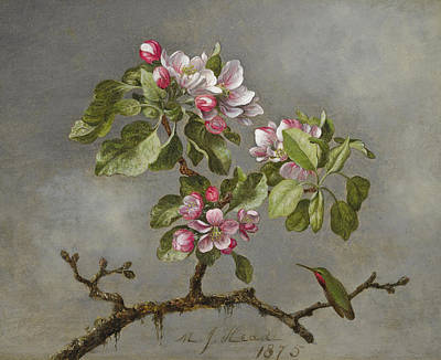 Painting - Apple Blossoms And Hummingbird by Martin Johnson Heade