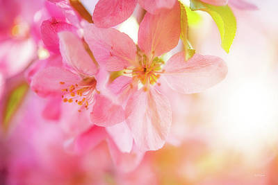 Photograph - Apple Blossoms Bright Glow by Leland D Howard