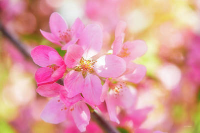 Photograph - Apple Blossoms Cheerful Glow by Leland D Howard