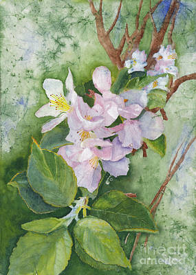 Animal Paintings David Stribbling - Apple Blossoms in Spring Watercolor by Conni Schaftenaar