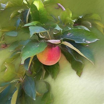 Photograph - Apple Branch by Leslie Montgomery