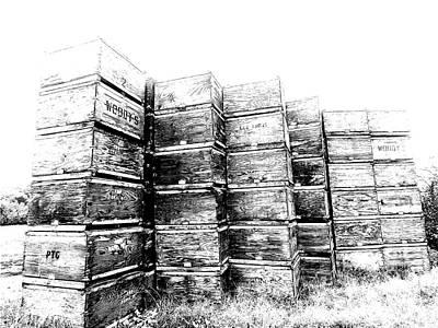 Still Life Drawings - Apple Crates Sketch 300 by Sharon Williams Eng