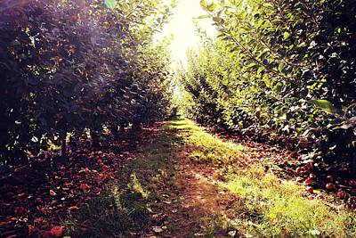 Photograph - Apple Orchard by Candice Trimble