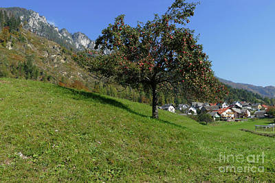Photograph - Apple Tree - Alpine Village by Phil Banks