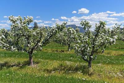 Beverly Brown Fashion Rights Managed Images - Apple Trees In Bloom and Clouds Royalty-Free Image by Allan Van Gasbeck