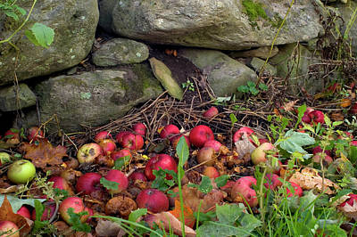 Photograph - Apples And The Stone Wall by Jeffrey PERKINS