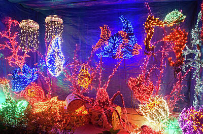 Photograph - Aquarium Fish Christmas Holiday Lights At Night by Valerie Garner