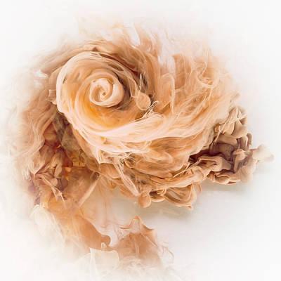 Photograph - Aqueous Bloom - Coffee and Cream by David Thompson