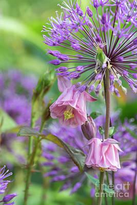 Photograph - Aquilegia And Allium Flowers by Tim Gainey
