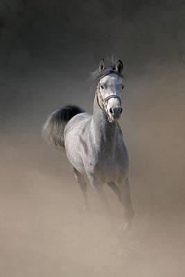 Arabian Horse Running Through Dust Art Print