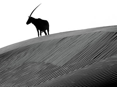 Photograph - Arabian Oryx And The Myth Of The Unicorn by Joe & Clair Carnegie / Libyan Soup