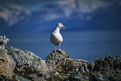 Photograph - Arctic Bird, Glaucous Burgomeister Gull by Kai Mueller