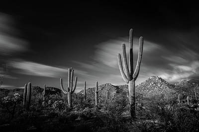 Arizona Black And White Original