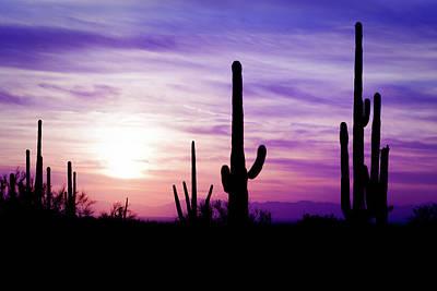 Photograph - Arizona Desert Cactus Sagauro Winter by Adamkaz