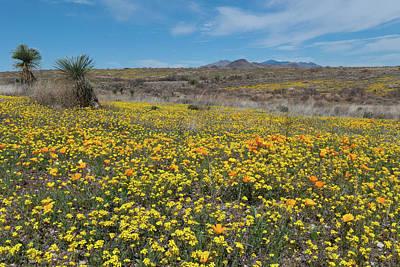 Photograph - Arizona Desert Wildflower Landscape by Cascade Colors