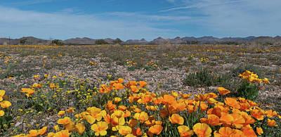 Photograph - Arizona Poppy Panorama by Cascade Colors